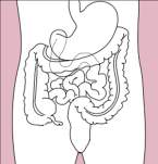 Stomach_colon_rectum_diagram